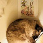 必ず子供が眠る!と噂の「魔法の絵本」の読み聞かせ