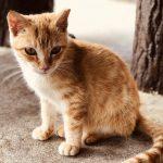 猫天国・・・そう、それが猫島 ~Go to Cat heaven~
